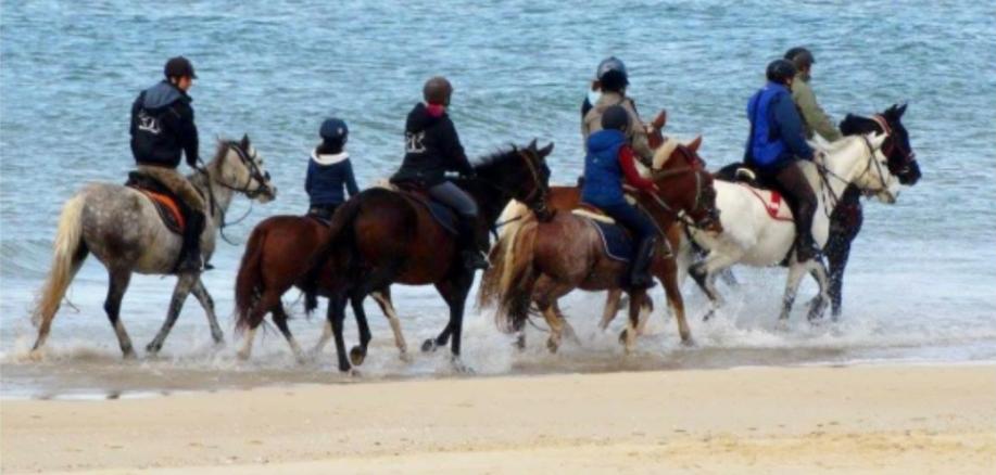 stage équitation bordeaux beautiran plage